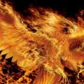 phoenix777 (Marek M)